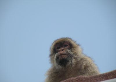 nomad-life-singe-gibraltar