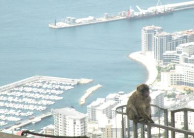 nomad-life-singe-gibraltar-vue-port