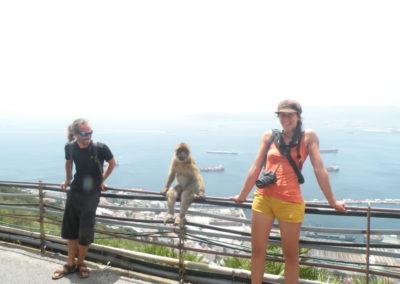 nomad-life-singe-prend-la-pose-gibraltar
